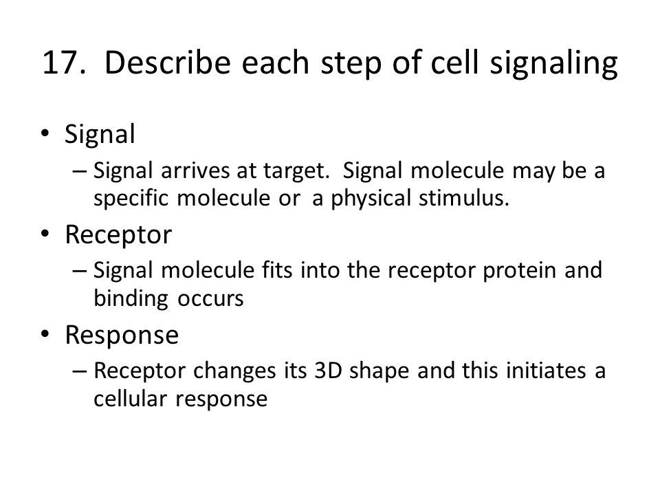 17. Describe each step of cell signaling