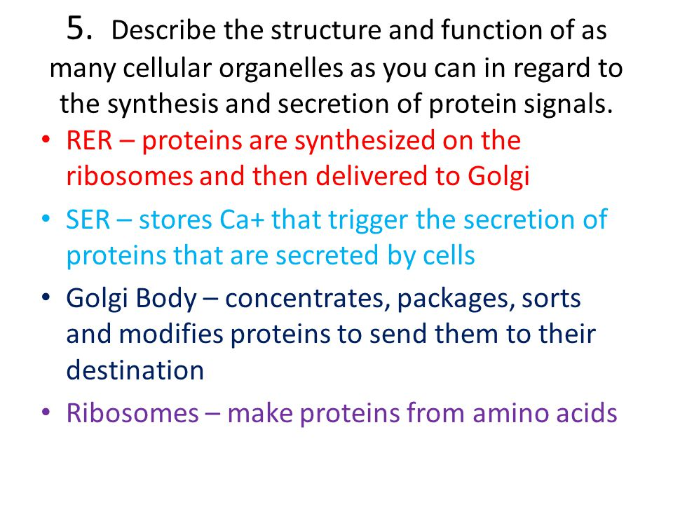 5. Describe the structure and function of as many cellular organelles as you can in regard to the synthesis and secretion of protein signals.
