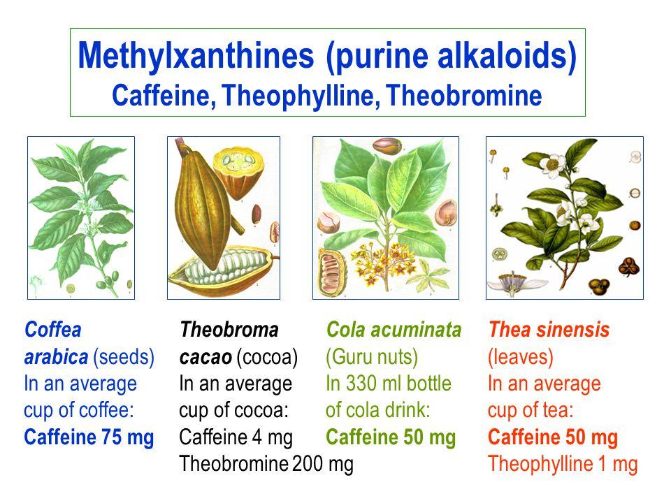 Methylxanthines (purine alkaloids) Caffeine, Theophylline, Theobromine