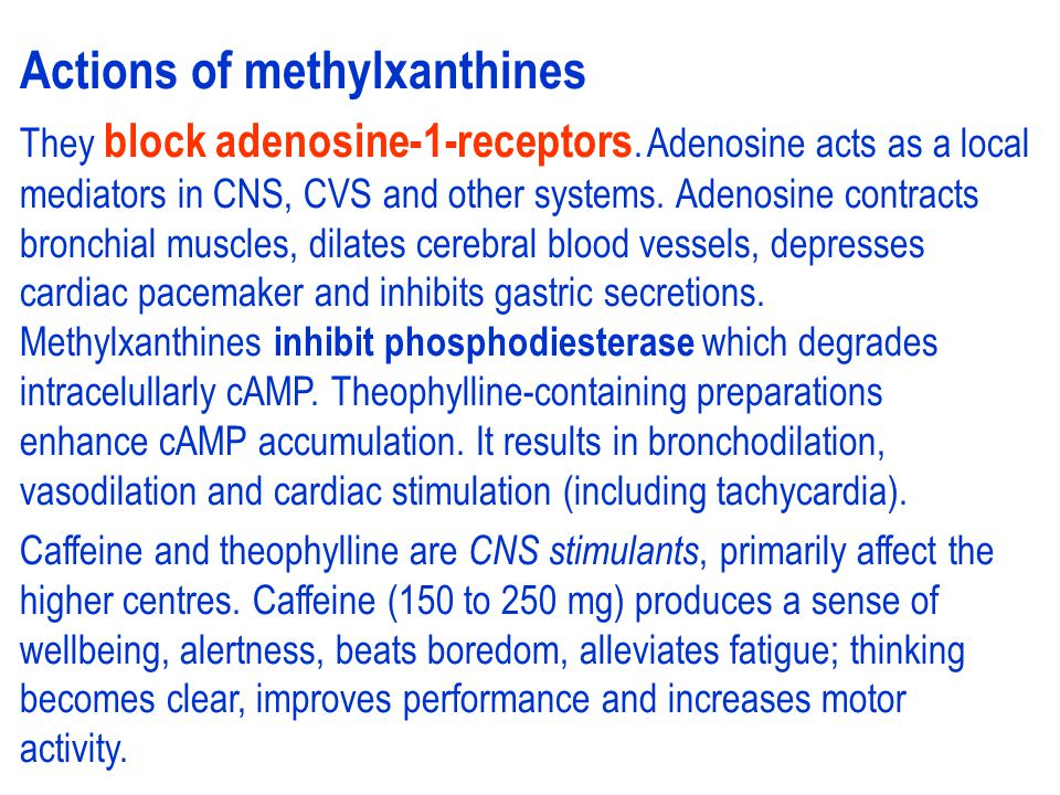 Actions of methylxanthines