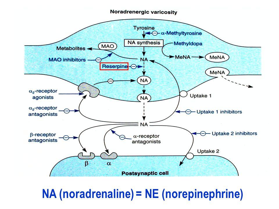 NA (noradrenaline) = NE (norepinephrine)
