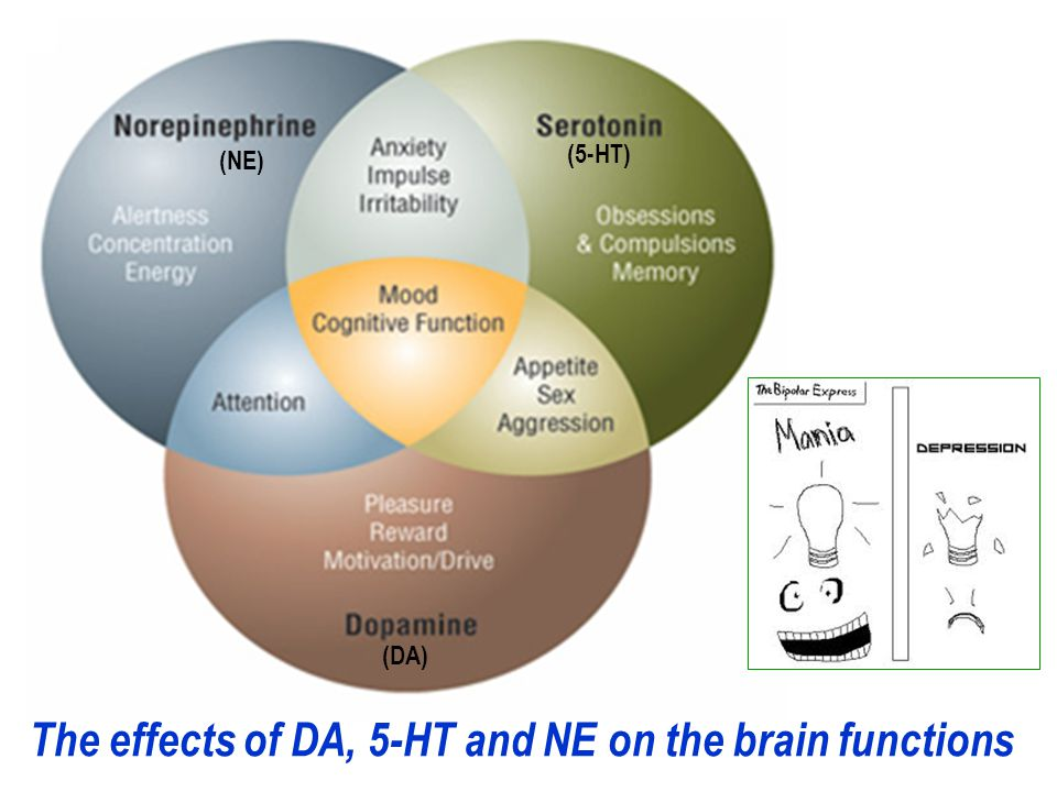 The effects of DA, 5-HT and NE on the brain functions