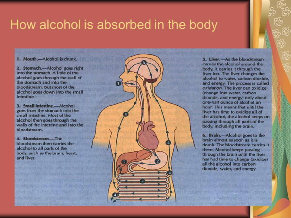 How alcohol is absorbed in the body