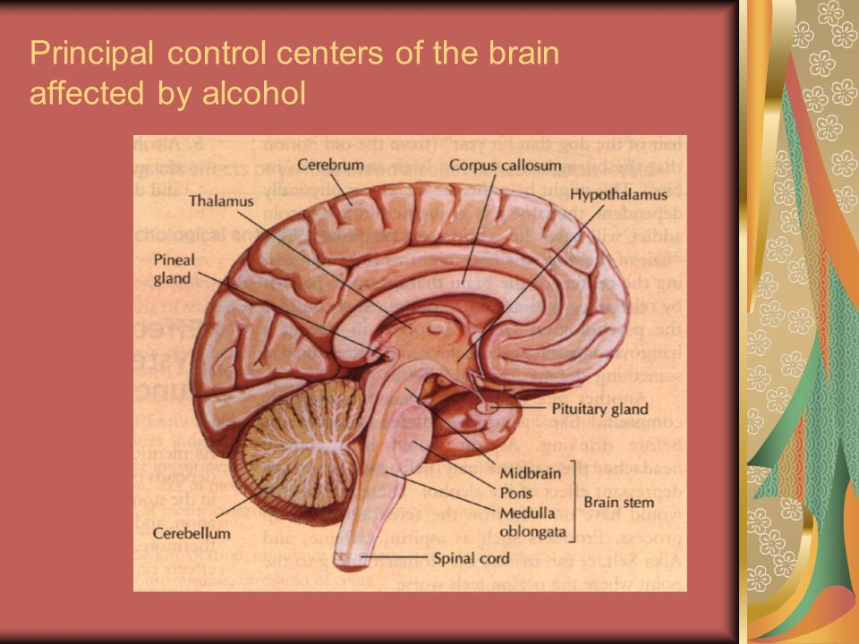 Principal control centers of the brain affected by alcohol