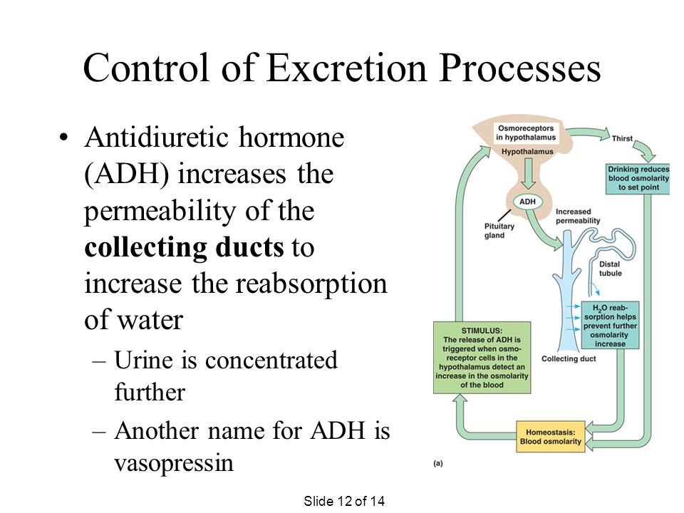 Control of Excretion Processes