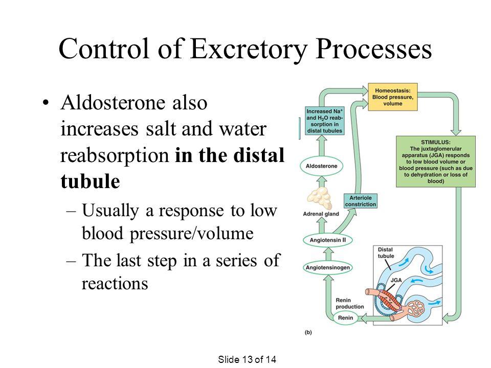 Control of Excretory Processes