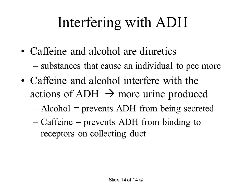 Interfering with ADH Caffeine and alcohol are diuretics