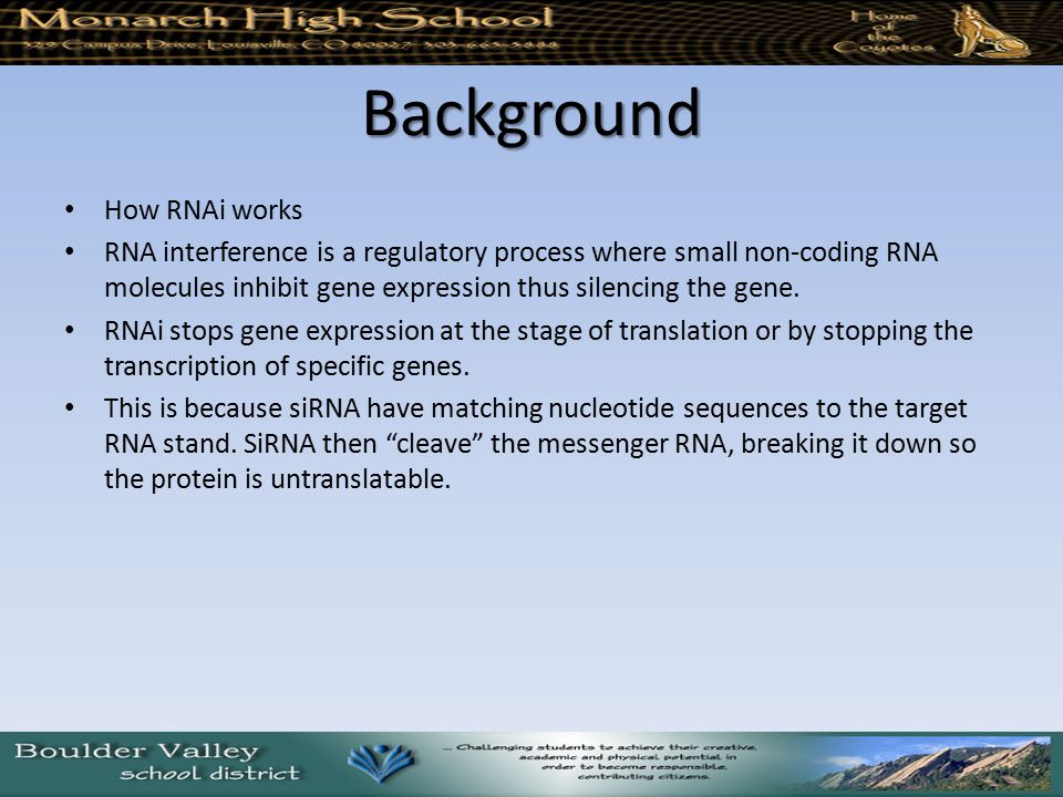 Background How RNAi works