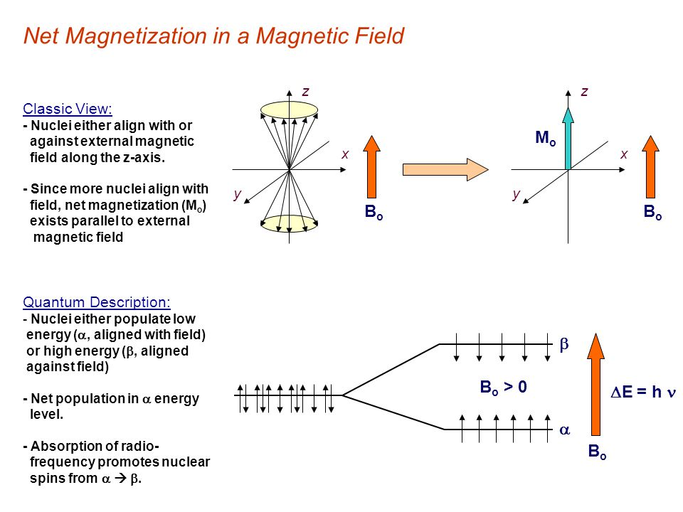 Net Magnetization in a Magnetic Field