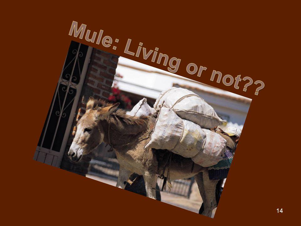 Mule: Living or not