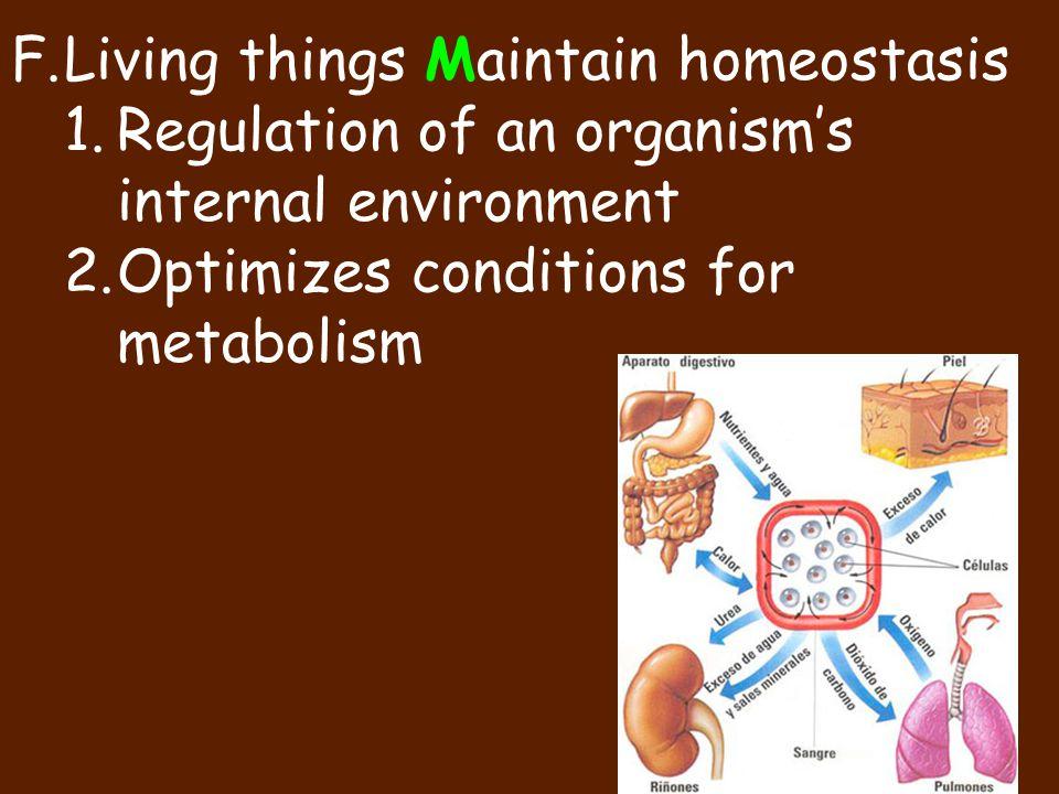 Living things Maintain homeostasis