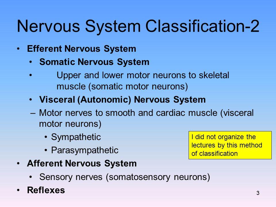 Nervous System Classification-2