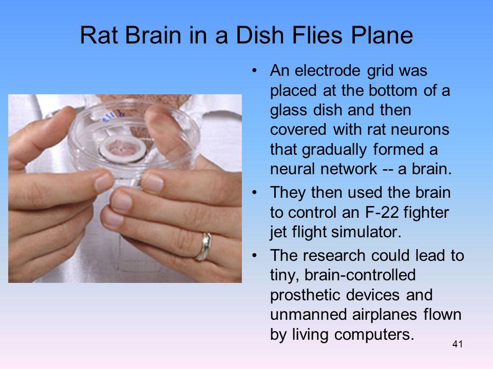 Rat Brain in a Dish Flies Plane