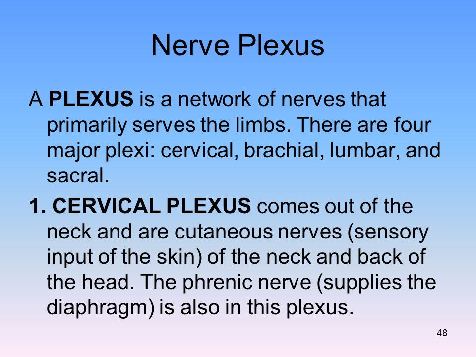Nerve Plexus A PLEXUS is a network of nerves that primarily serves the limbs. There are four major plexi: cervical, brachial, lumbar, and sacral.