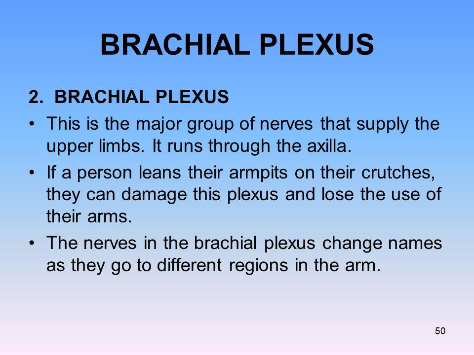BRACHIAL PLEXUS 2. BRACHIAL PLEXUS