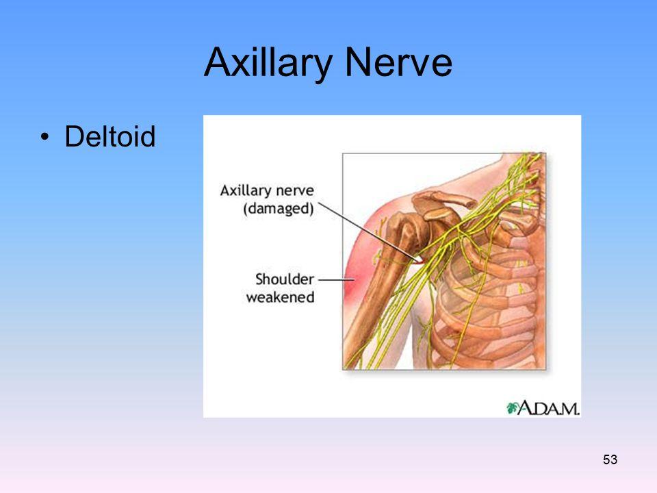 Axillary Nerve Deltoid