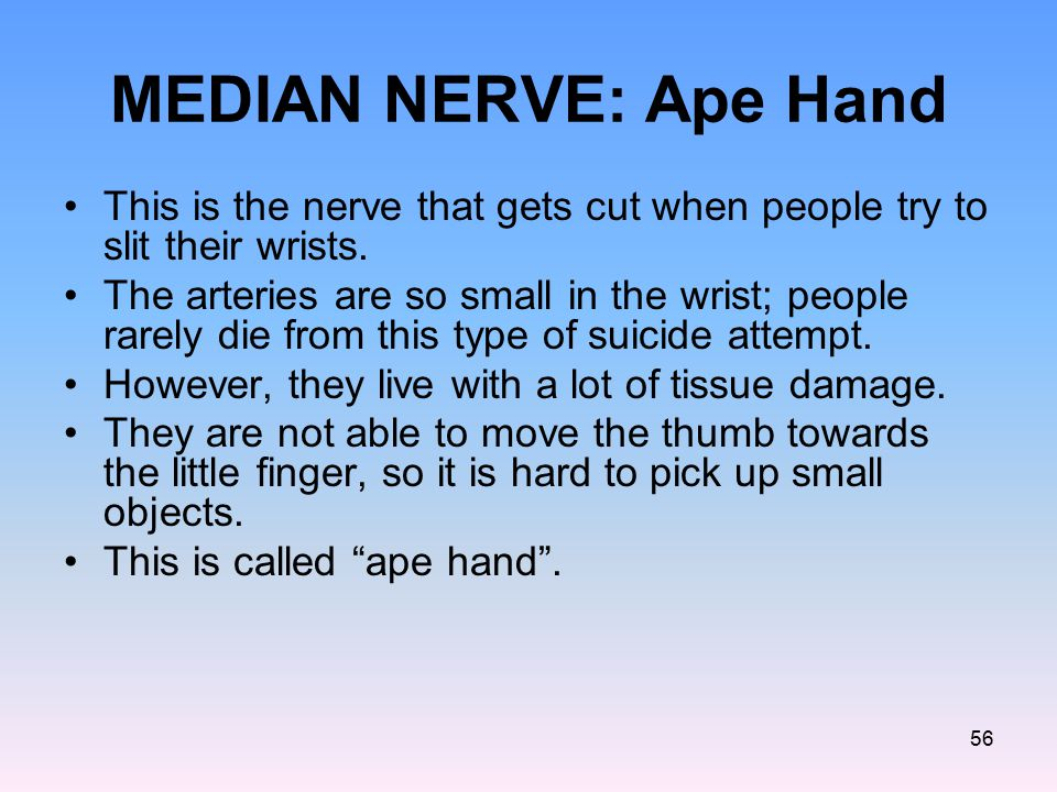 MEDIAN NERVE: Ape Hand This is the nerve that gets cut when people try to slit their wrists.