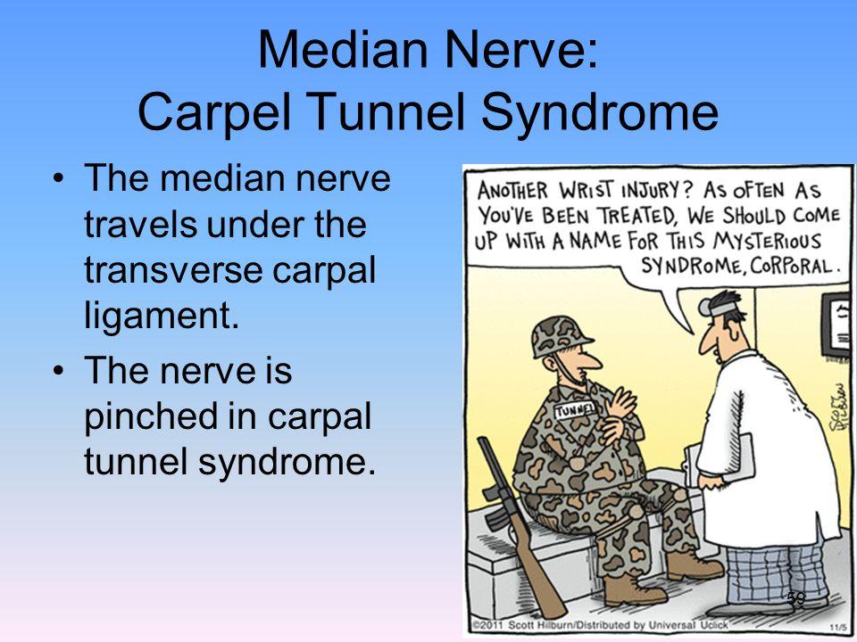 Median Nerve: Carpel Tunnel Syndrome