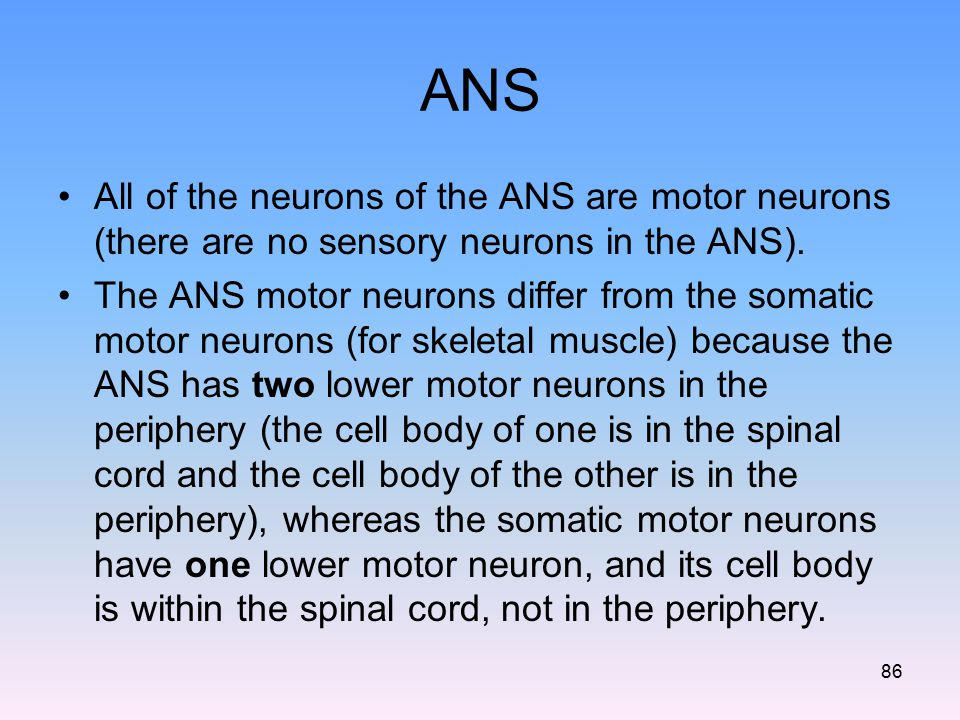 ANS All of the neurons of the ANS are motor neurons (there are no sensory neurons in the ANS).