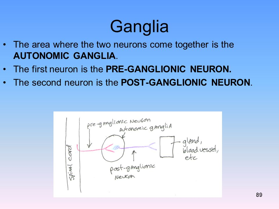 Ganglia The area where the two neurons come together is the AUTONOMIC GANGLIA. The first neuron is the PRE-GANGLIONIC NEURON.