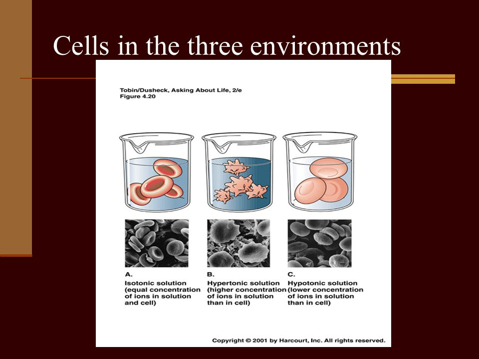 Cells in the three environments