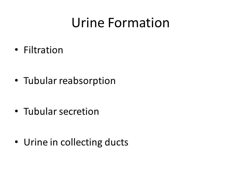 Urine Formation Filtration Tubular reabsorption Tubular secretion
