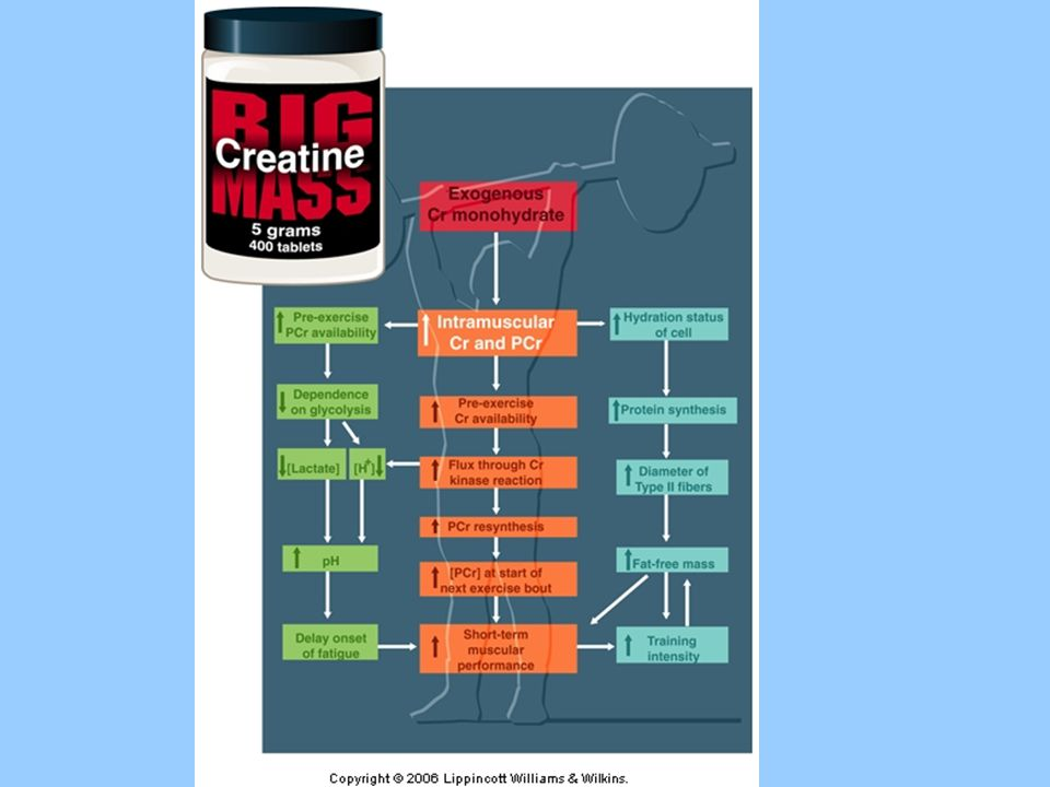 How Creatine might assist in intense, short term exercise and the exercise training response