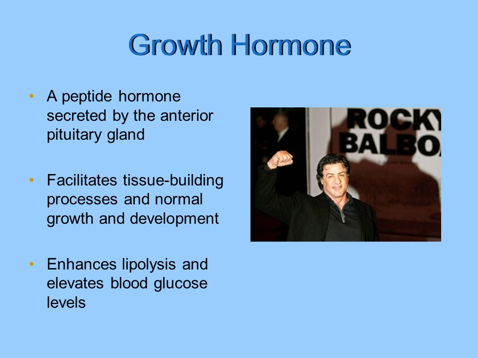 Growth Hormone A peptide hormone secreted by the anterior pituitary gland. Facilitates tissue-building processes and normal growth and development.