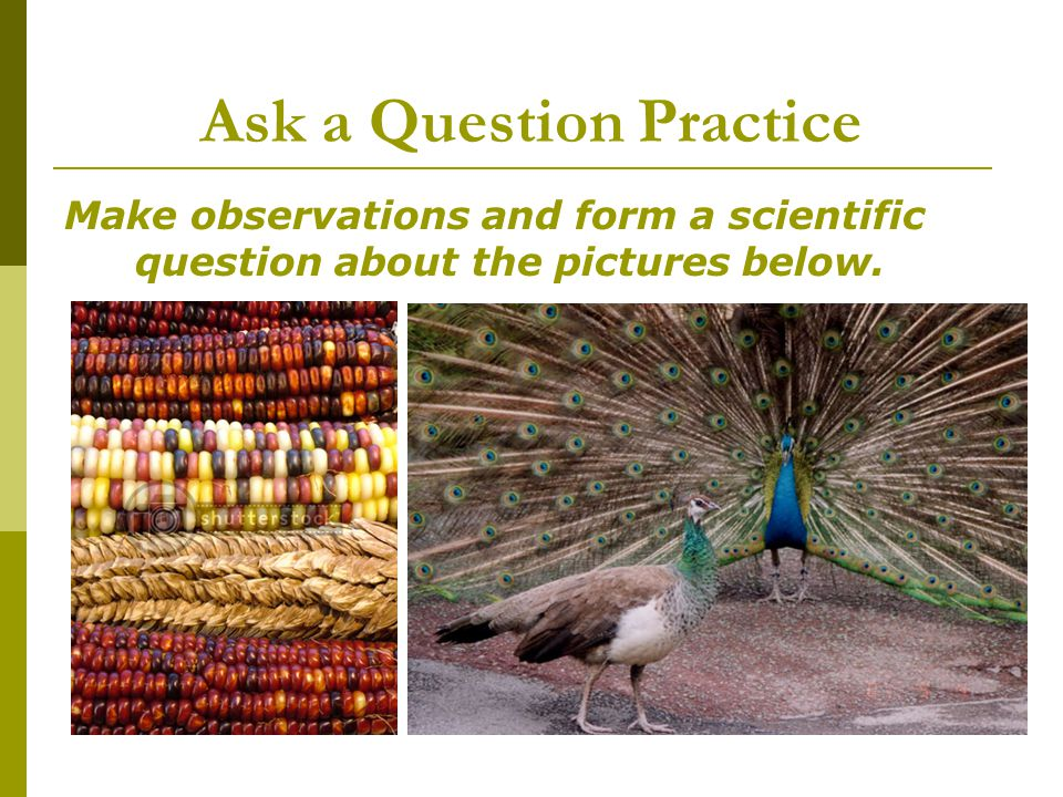Ask a Question Practice