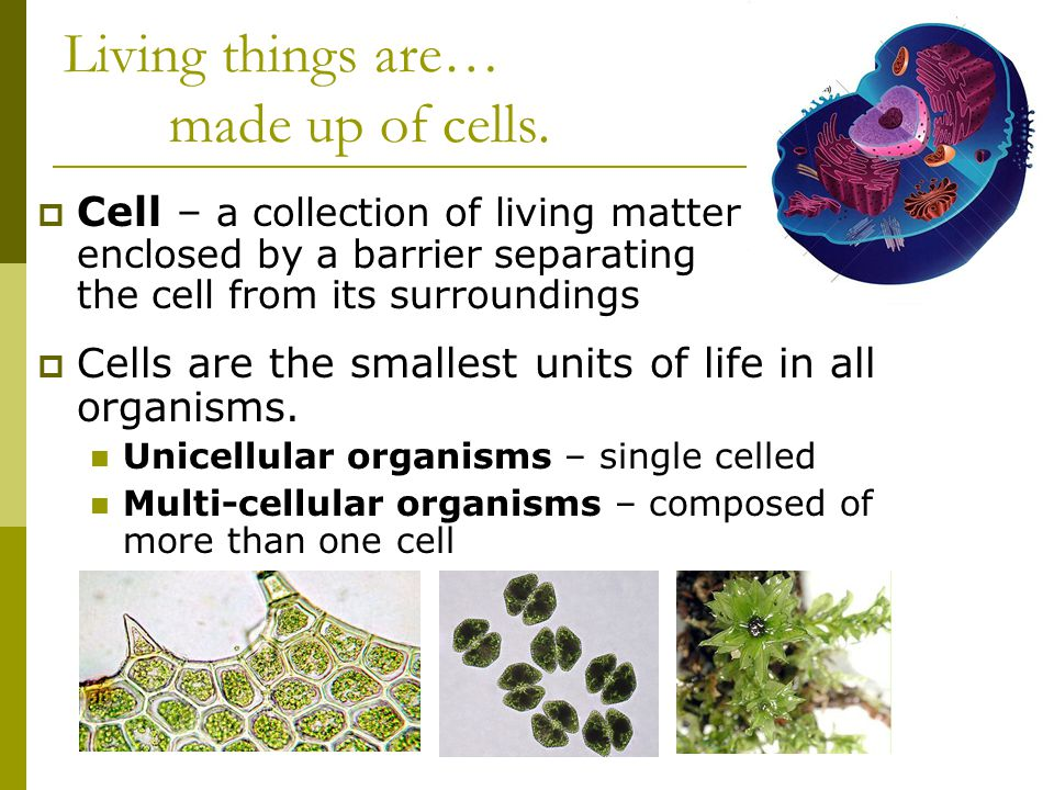Living things are… made up of cells.