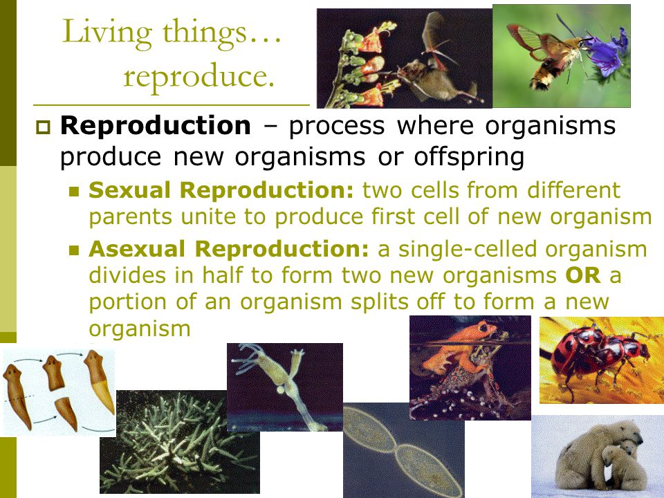 Living things… reproduce.