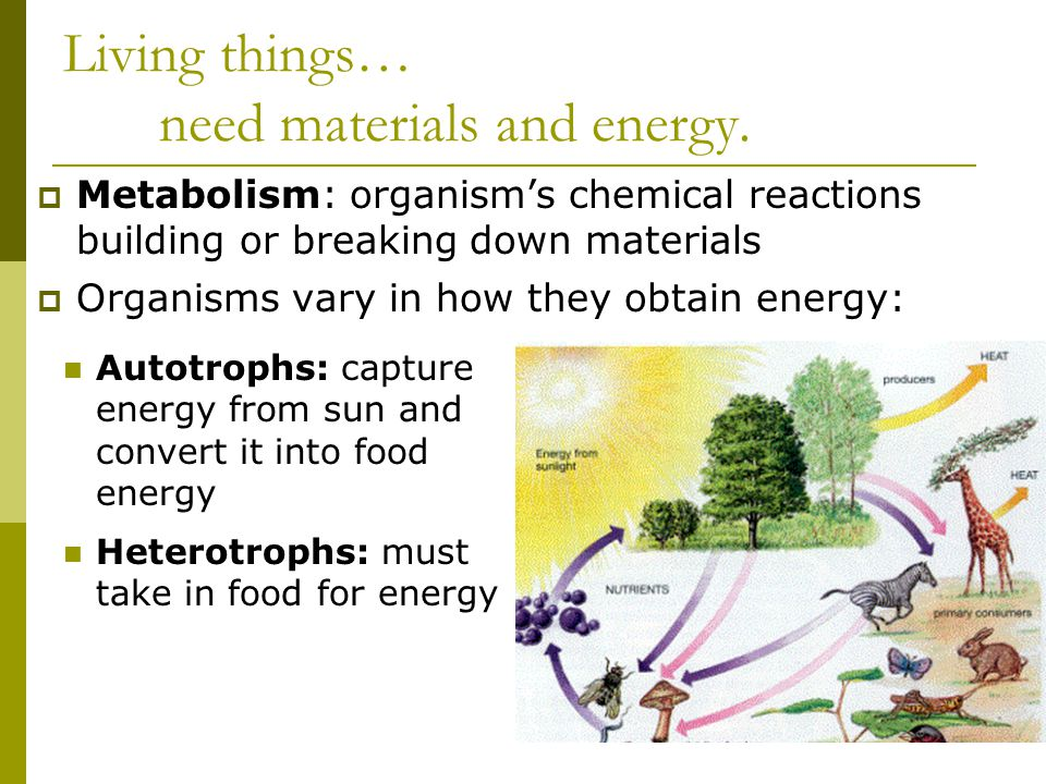Living things… need materials and energy.
