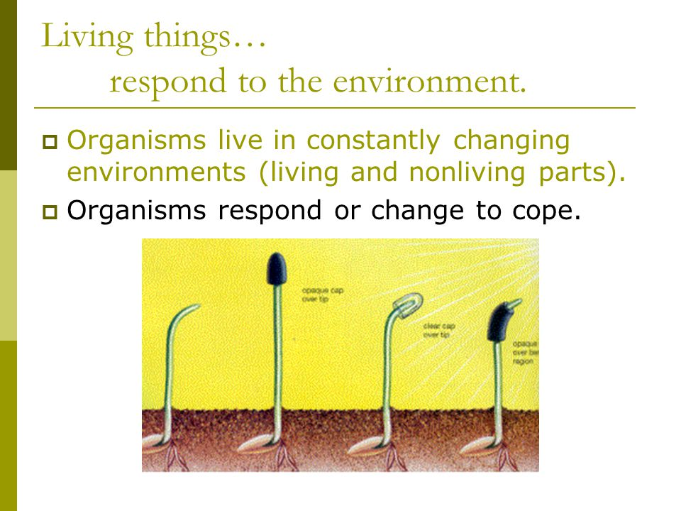 Living things… respond to the environment.