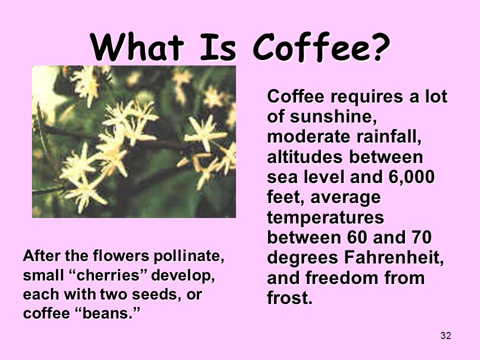 What Is Coffee