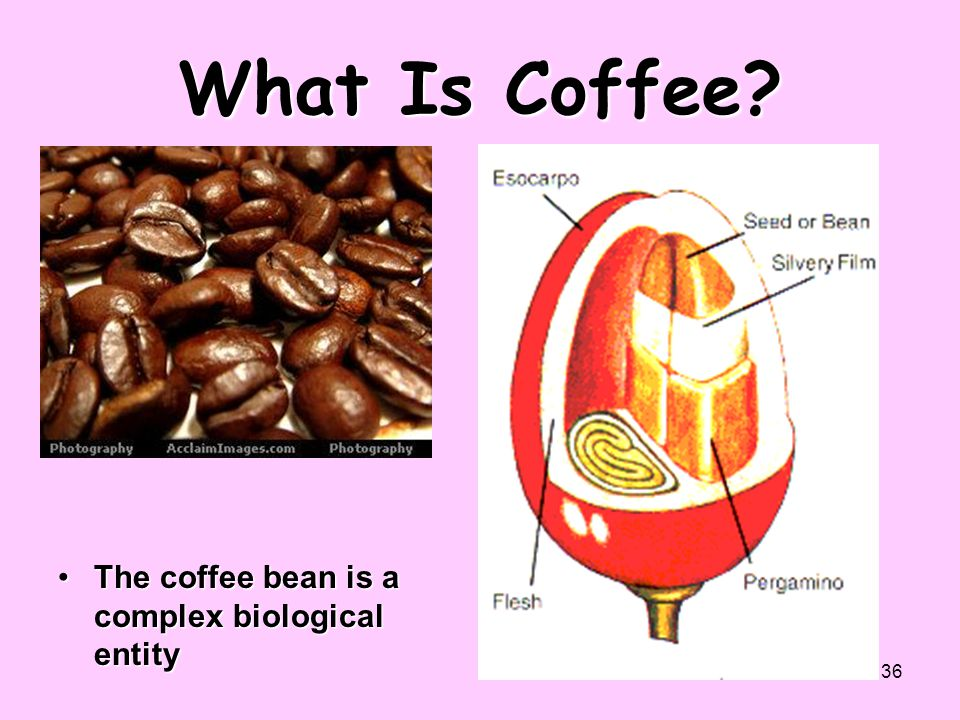 What Is Coffee The coffee bean is a complex biological entity