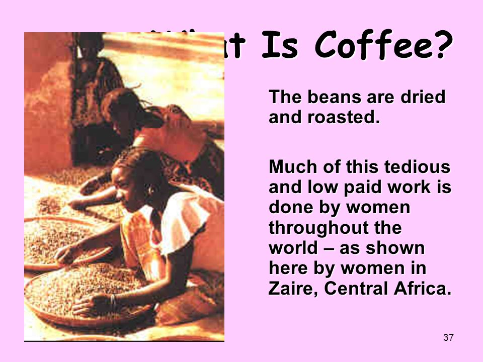 What Is Coffee The beans are dried and roasted.