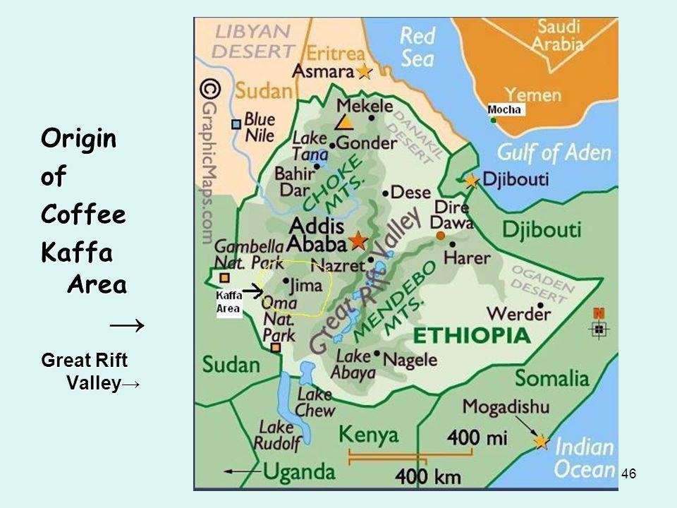 Origin of Coffee Kaffa Area → Great Rift Valley→