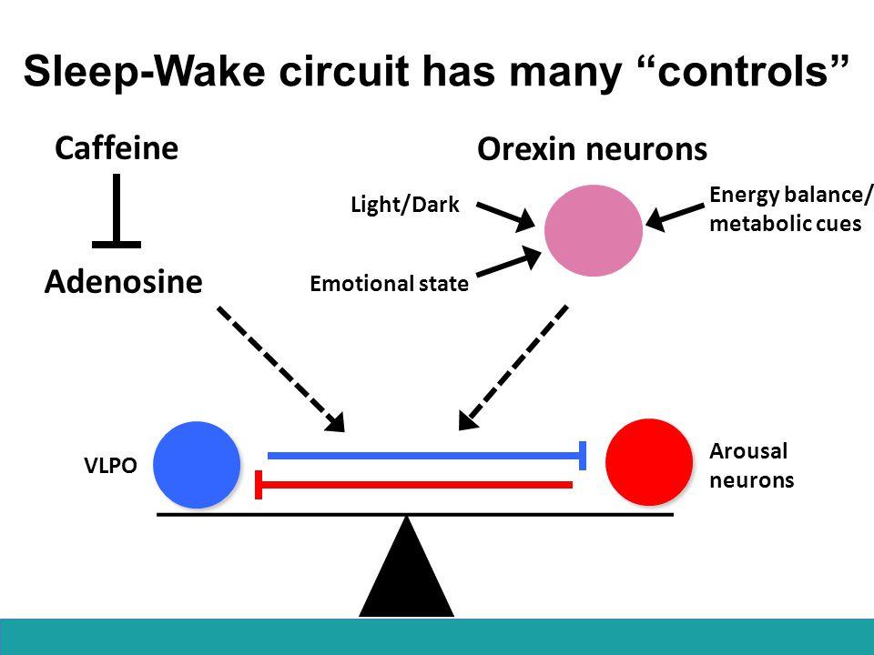 Sleep-Wake circuit has many controls