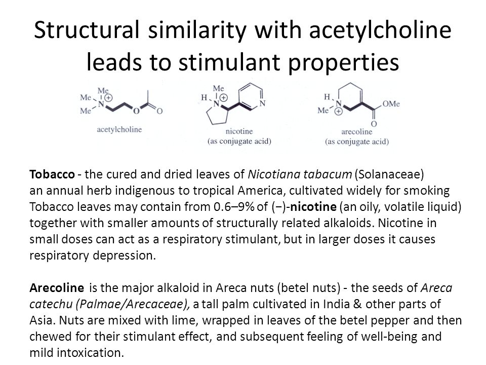 Structural similarity with acetylcholine leads to stimulant properties