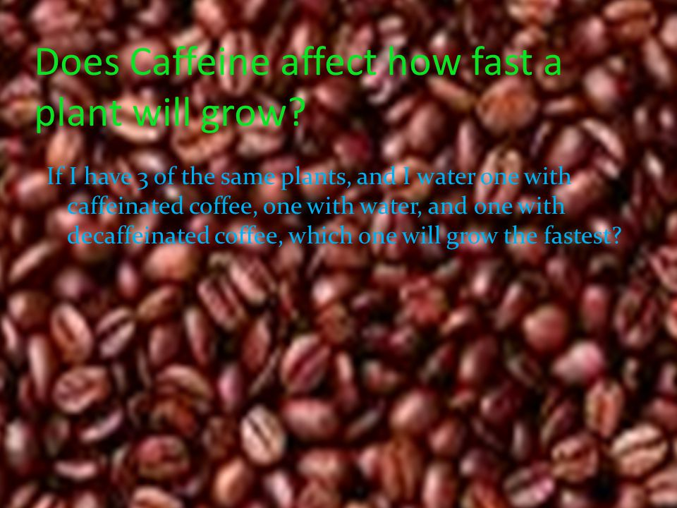 Does Caffeine affect how fast a plant will grow