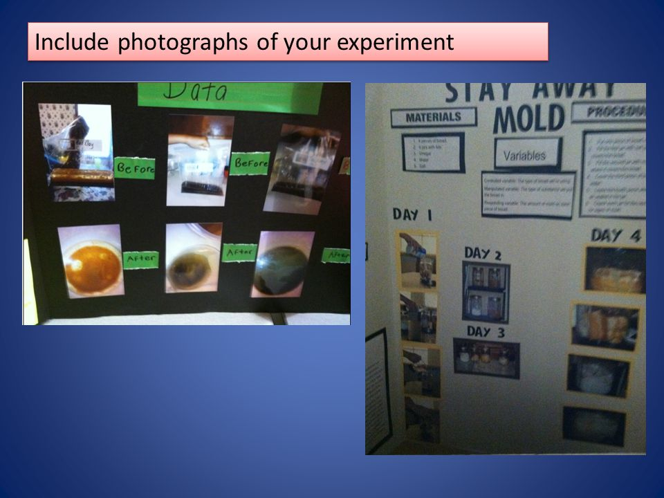 Include photographs of your experiment