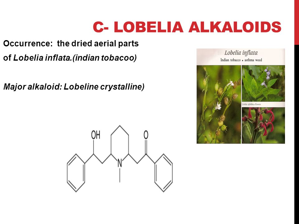 c- Lobelia alkaloids Occurrence: the dried aerial parts of Lobelia inflata.(indian tobacoo) Major alkaloid: Lobeline crystalline)