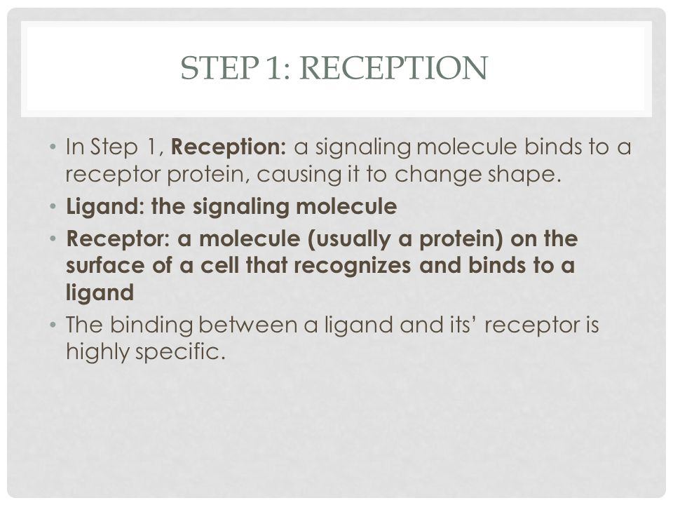 Step 1: reception In Step 1, Reception: a signaling molecule binds to a receptor protein, causing it to change shape.