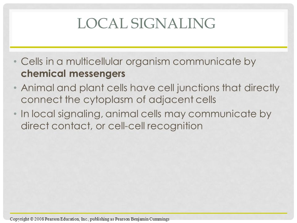 Local Signaling Cells in a multicellular organism communicate by chemical messengers.