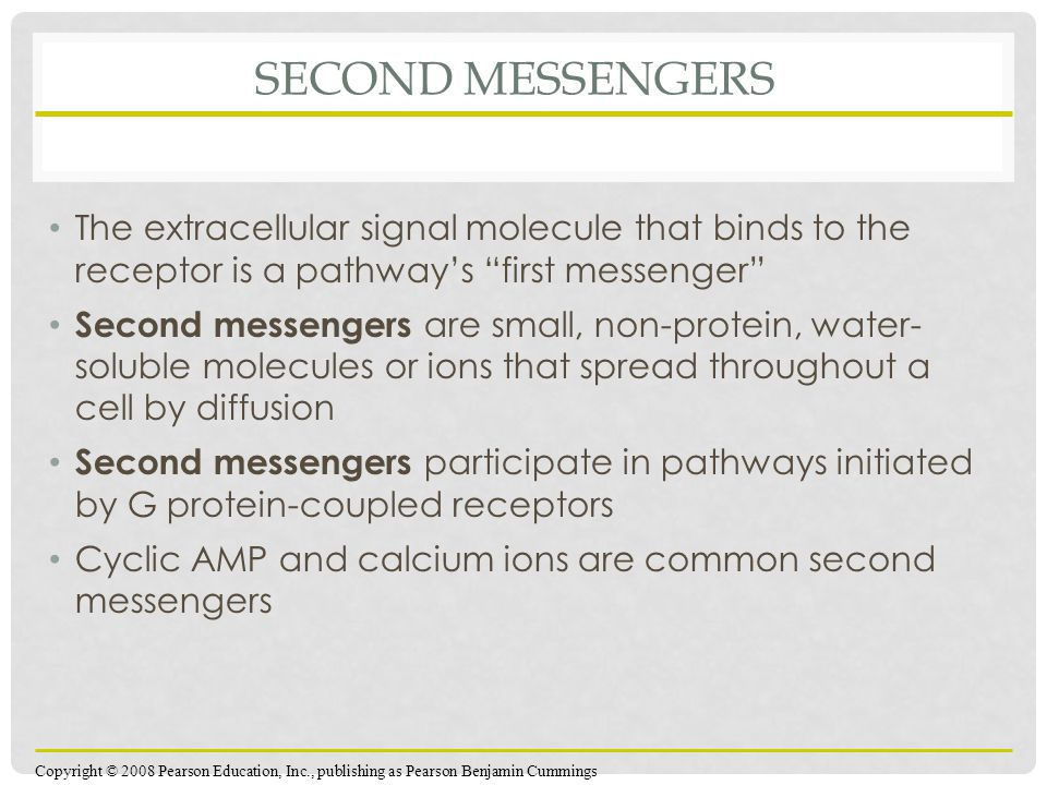 Second Messengers The extracellular signal molecule that binds to the receptor is a pathway's first messenger