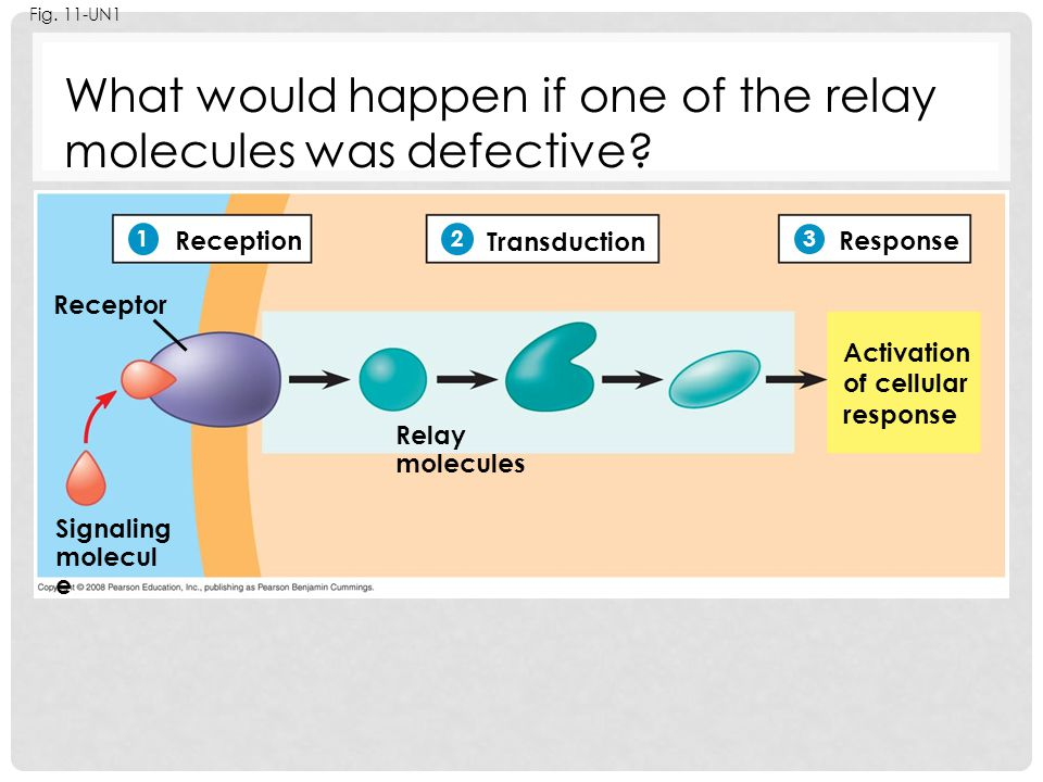 What would happen if one of the relay molecules was defective