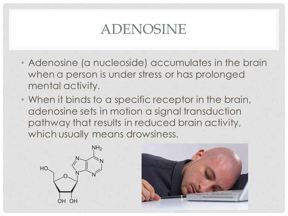 adenosine Adenosine (a nucleoside) accumulates in the brain when a person is under stress or has prolonged mental activity.