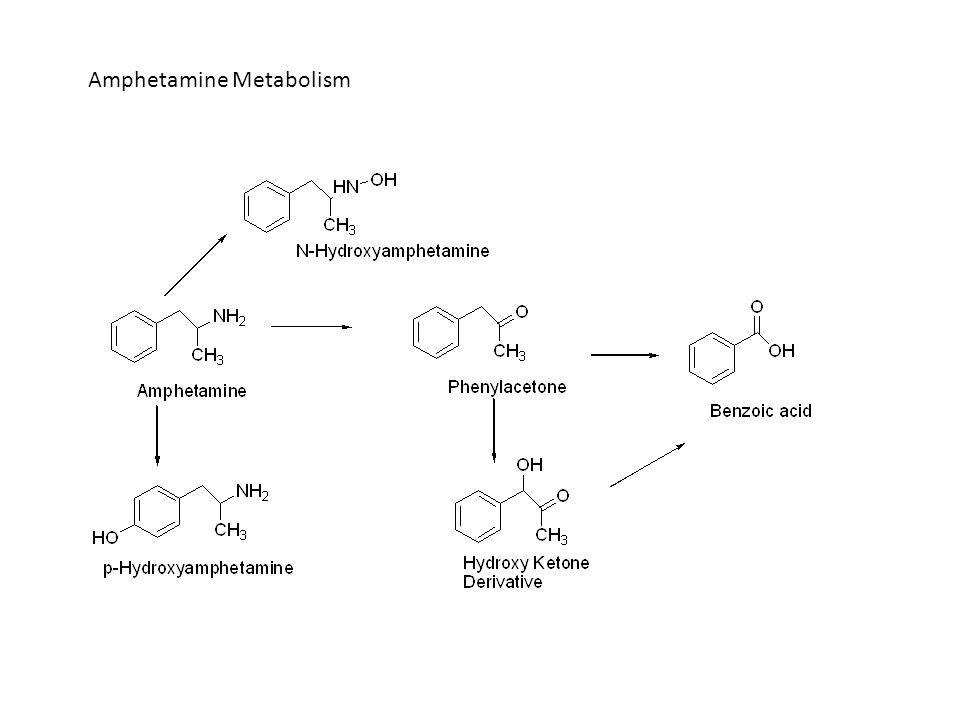 Amphetamine Metabolism