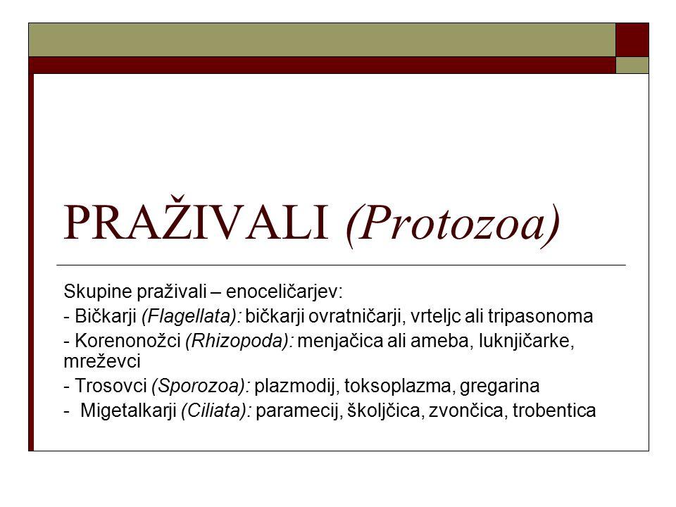 PRAŽIVALI (Protozoa) Skupine praživali – enoceličarjev: