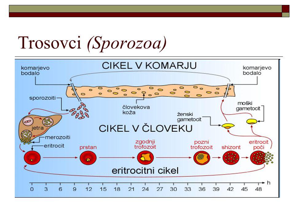 Trosovci (Sporozoa)